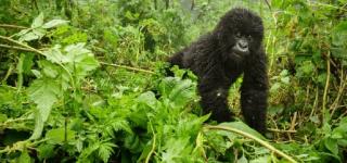 10 Days Rwanda & Kenya Safari