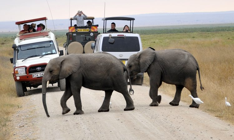 Activities to do in Amboseli National Park