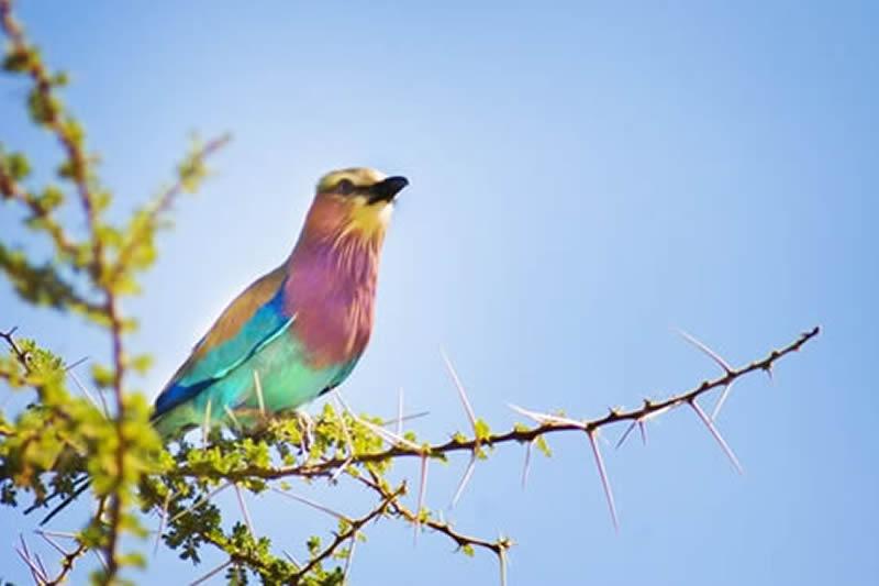 Birding Safari in Amboseli National Park