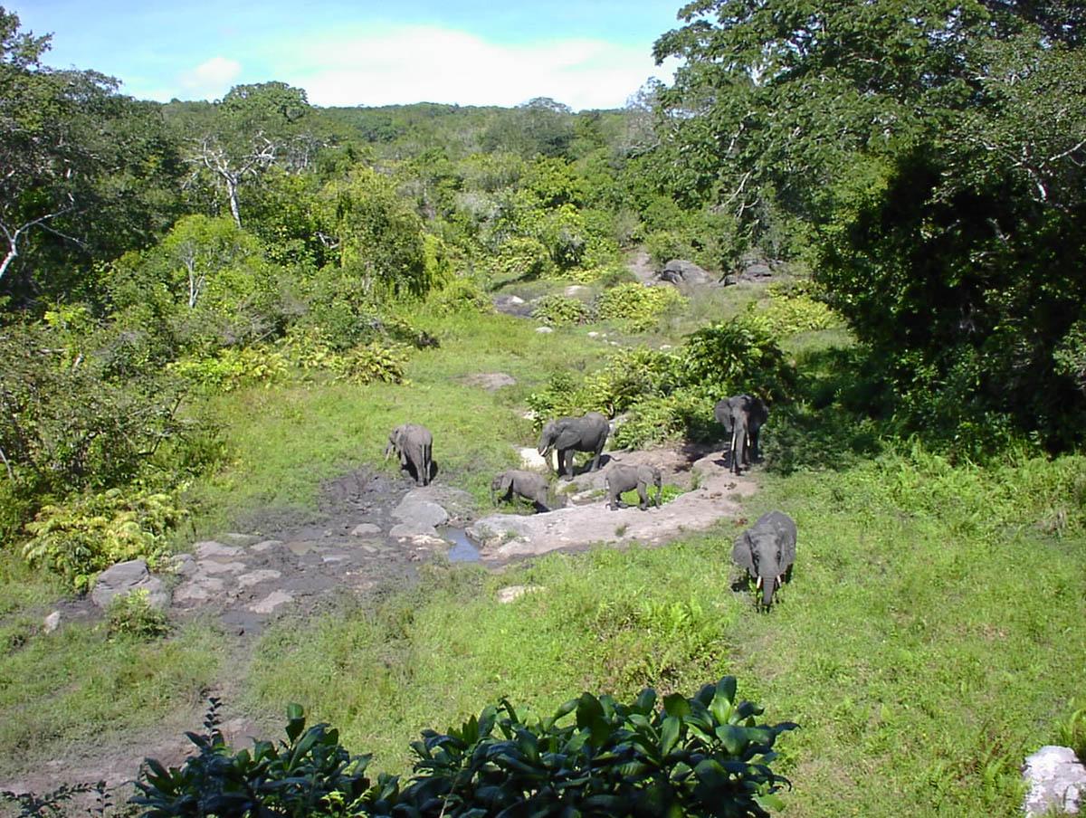 Arabuko Sosoke National Park & Forest Reserve