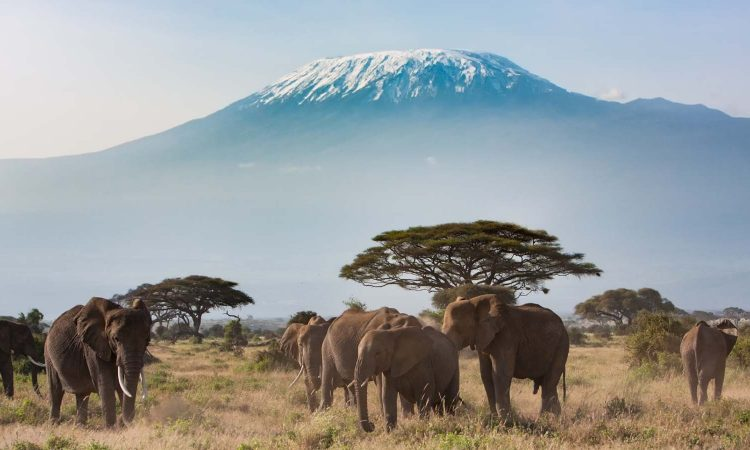 Attractions in Amboseli National Park Kenya