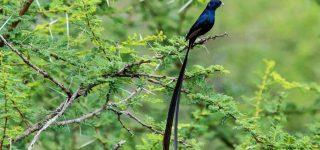 Bird list of Chyulu Hills National Park