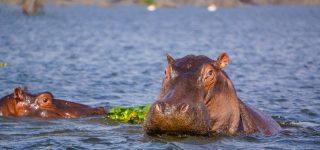 Lake Naivasha National Park