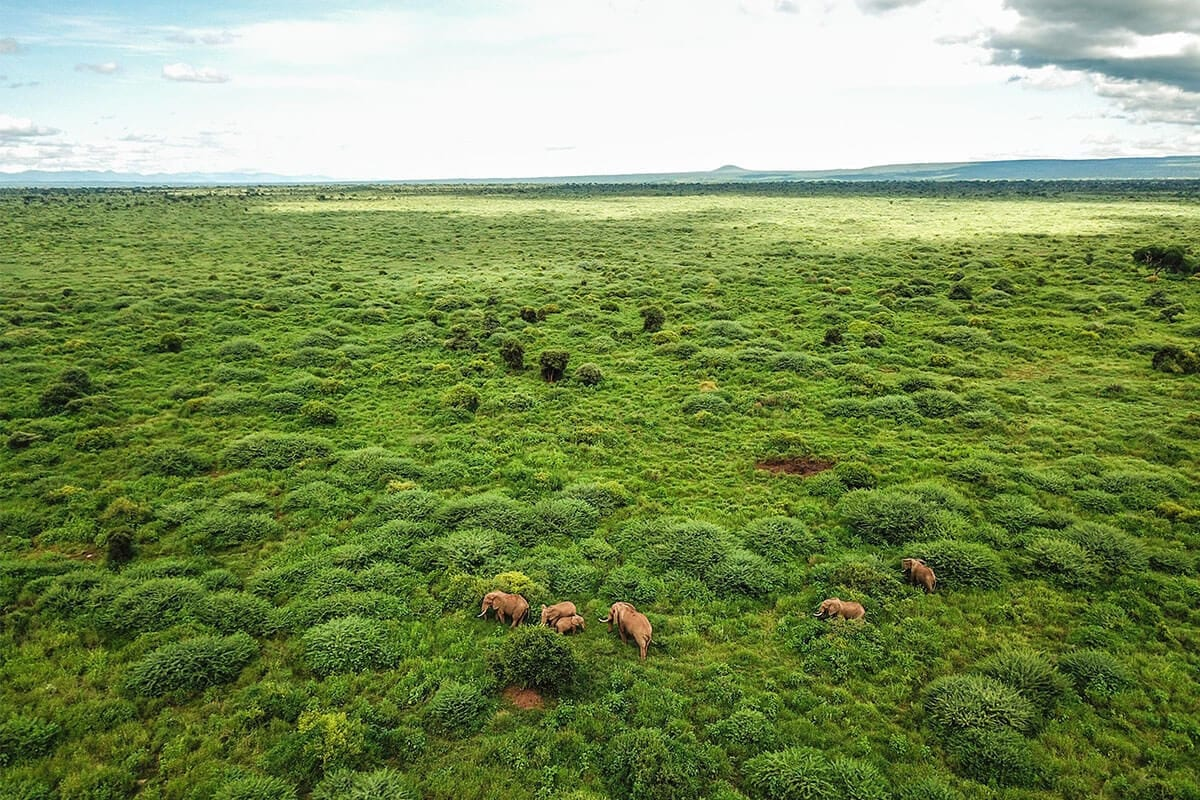 Plants in Amboseli National Park