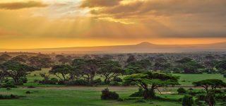 Plants in Amboseli National Park