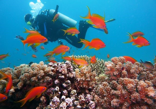 Things to do in Kisite Mpunguti Marine National Park & Reserve