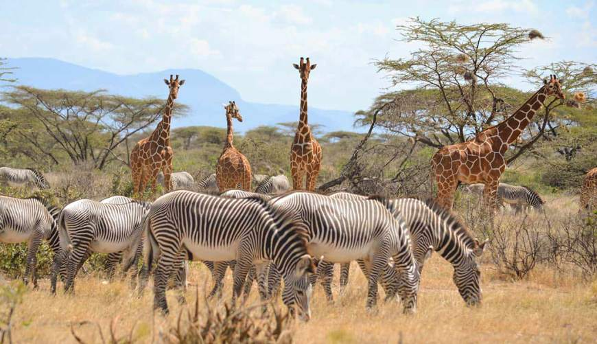 12 Best National Parks in Kenya 2021