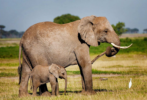 1 Day Amboseli National Park Tour