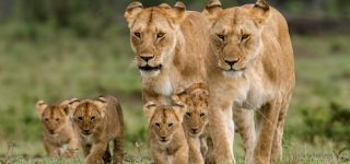 3 Days Masai Mara Wildlife Safaris