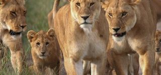 4 Days Masai Mara & Lake Naivasha Safari