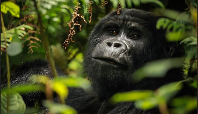 4 Days Virunga National Park Safari