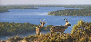 Dodori National Reserve
