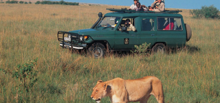 Game Drive in Aberdare National Park