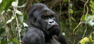 Le Petite Virunga Package