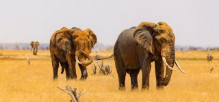 3 Days Tsavo West Wildlife Safari