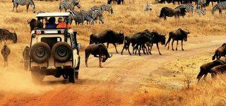 11 Days Kenya Wildlife Safari