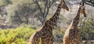 8 Days Kenya Uganda Safari Adventure