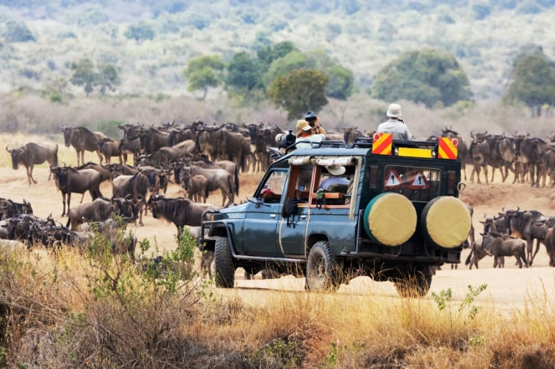 8 Days Best of Kenya Wildlife Safari