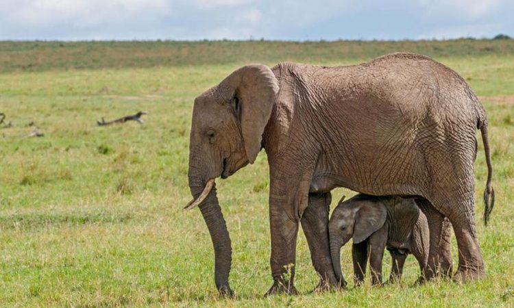 Bisanadi National Reserve Kenya