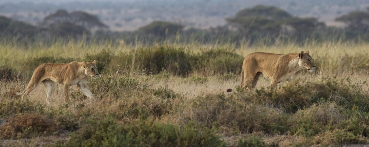 History of Amboseli National Park