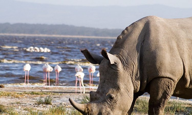 3 Days Kenya Lake Naivasha & Lake Nakuru Safari Tour
