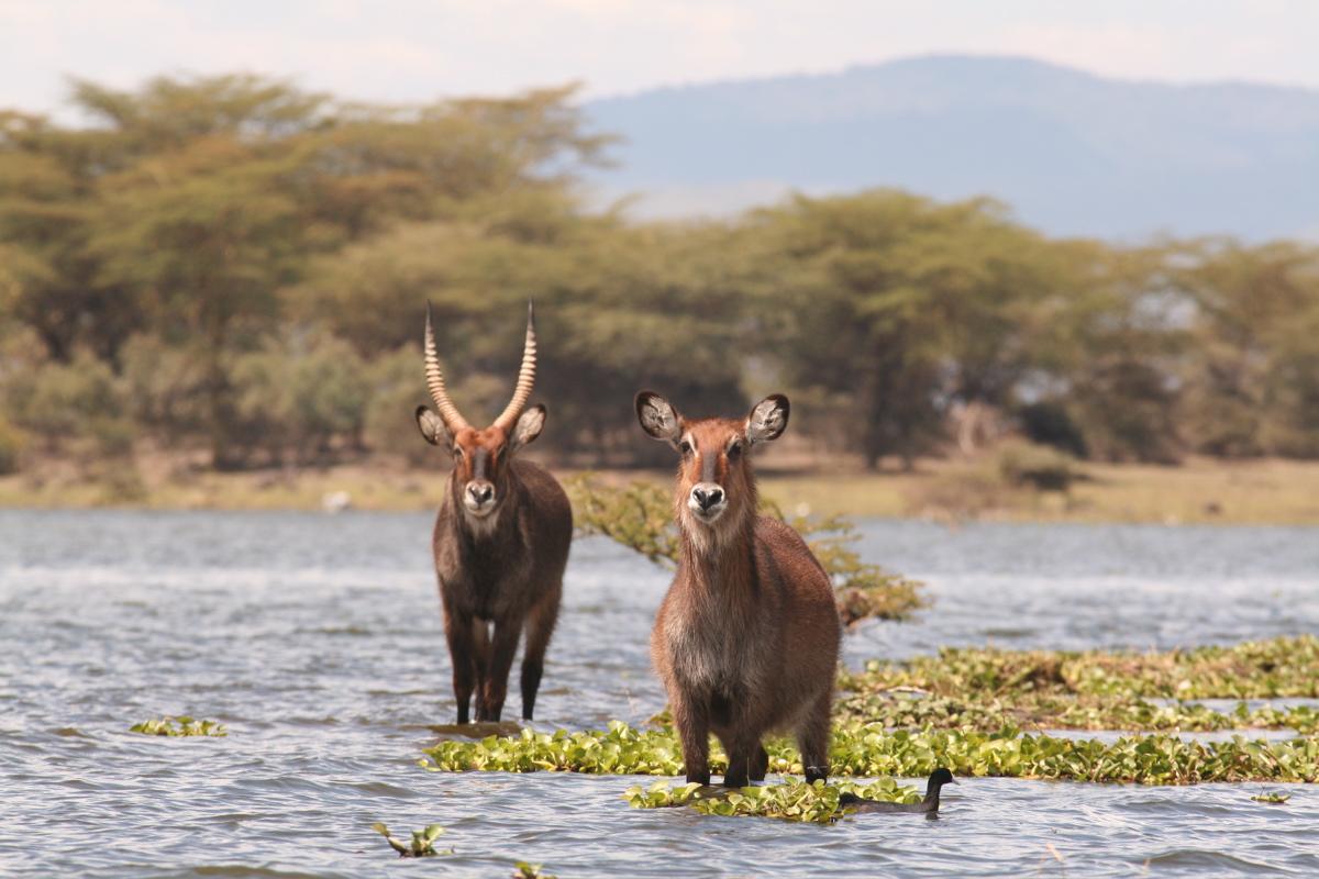 3 Days Kenya Lake Naivasha & Lake Nakuru Safari Tour