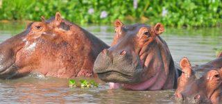 7 Days Uganda Wildlife & Primates Safari
