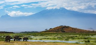 What to Expect in Amboseli National Park Kenya