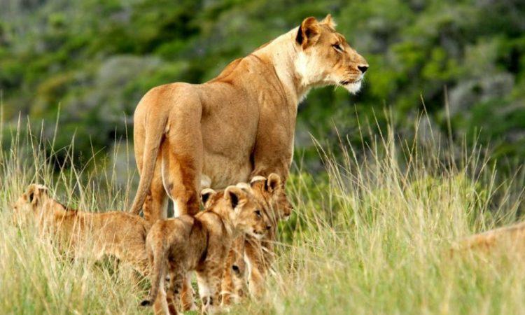 3 Days Kenya Tsavo East National Safari