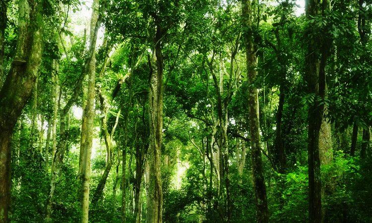 Witu Forest Reserve