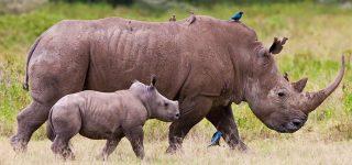 10 Days Kenya Wildlife Budget Safari