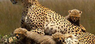12 Days Kenya Classic Safari