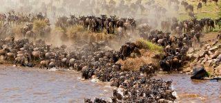 7 Days Masai Mara Honeymoon Safari