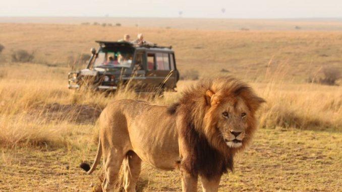 6 Days Kenya Masai Mara and Amboseli Wildlife Safari