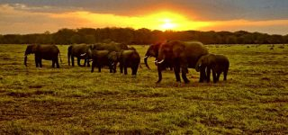 2 Days Amboseli Wildlife Safari