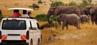 Safari Activities in Amboseli National Park