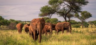 Tourist attractions in Amboseli National Park