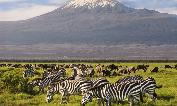5 Days Amboseli & Tsavo Wildlife Safari